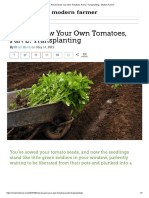 How to Grow Your Own Tomatoes, Part 2_ Transplanting - Modern Farmer
