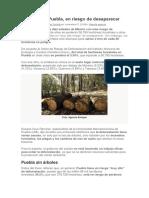 Bosques en Puebla