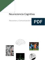 4 Neurociencia Cognitiva Clase 3