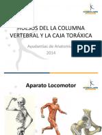 Osteología - Columna y Tórax