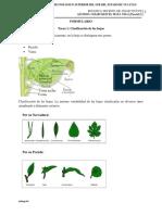 TIpos de hojas.docx