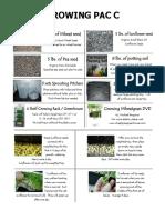 Growing sunflower shoots and wheatgrass.pdf