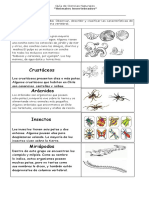 Invertebrados guía