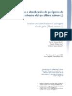 Aislamiento e Identificación de Patógenos de La Estirpe Silvestre Del Ajo (Allium Sativum L.)