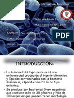 S. Typhimurium.pptx