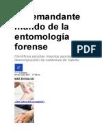 El Demandante Mundo de La Entomología Forense