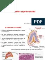 Defectos suprarrenales