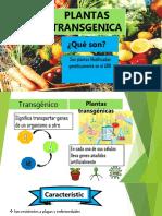 PLANTAS-TRANSGENICAS [Autoguardado] [Autoguardado].pptx