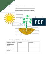 Ficha Requerimientos y productos de la fotosíntesis