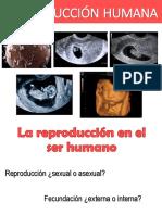 7. Reproduccion Humana - Taller