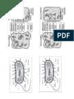 Figura Celulas
