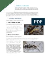 Clasificacion de Insectos Ordenes de Insectos