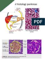 Normal Histologi Pankreas