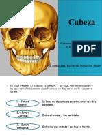 2.- Cabeza Huesos