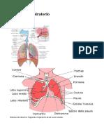 Apparato Respiratorio.pdf