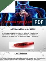 Arterias, venas y capilares. diapositivas