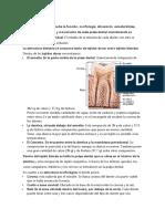 Natomia Dental