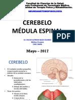 Neuroanátomofisiología - Clase Cerebelo y Médula