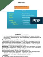 Bacterias 14 II-s
