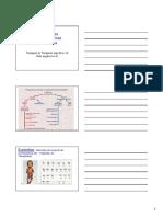2ª Aula - Síndromes Cromossômicas Numéricas