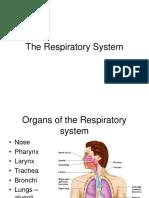 Ch 13 - Respiratory System