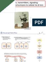 Receptors, Transmitters, Signaling_ Ovvero Come Comunicano Le Cellule Tra Di Loro
