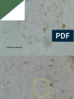 parasitologialab original2.pptx