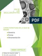 Clasificacion de Las Bacillariophytas Original