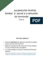 Curs 2 KT-plexuri Si Ramuri Terminale