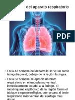 Pulmones.odp