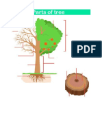 Parts of Tree 02