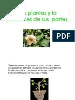 lasplantasylafuncionesdesuspartes-121108101630-phpapp01