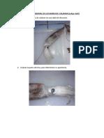 ANALISIS SENSORIAL DE LOS MARISCOS calamar.docx