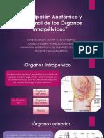 Descripción Anatómica y Funcional de Los Órganos Intrapélvicos.pptx FINAL
