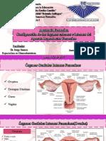 anatomiareproductorfemenino-170715034915