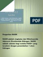 Oksidasi Nadh