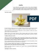 Andive.pdf
