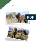 dartmoor pony booklet