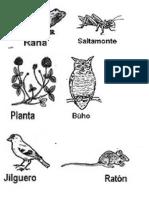 Animales chilenos red, cadena alimentaria.docx