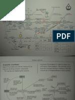 49723004-23720836-Ultimate-Organic-Chemistry-Mindmap-9746.pdf