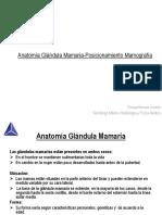 Anatomia Glandula Mamaria-Posicionamiento Mamografia