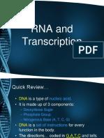 RNA and Transcription Notes