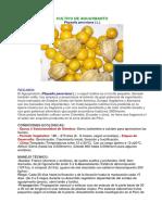 Cultivo de Aguaymanto