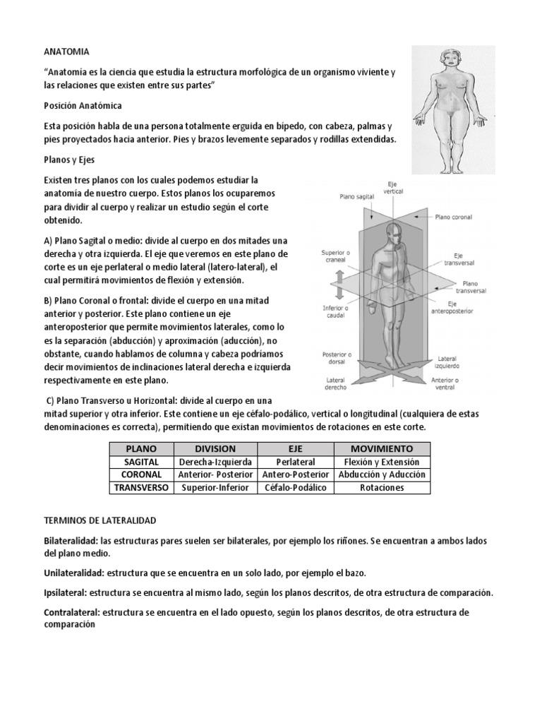 Anatomia Resumen Solemne 1