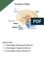 anatomi otak