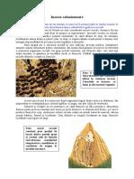 Animale si plante -  Insecte colonizatoare.pdf