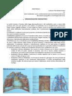 15 - Anatomia II - 06.03.2017