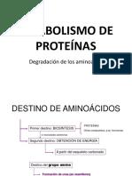 Catabolismo de Proteinas