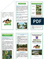Triptico Bioma Selva Peruana
