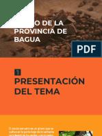 Cacao de Bagua